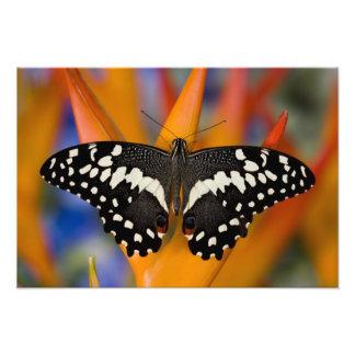 Sammamish, Washington Tropical Butterfly 14 Photo Art