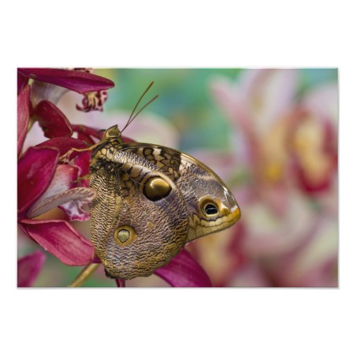 Sammamish, Washington Tropical Butterfly 14 Photographic Print