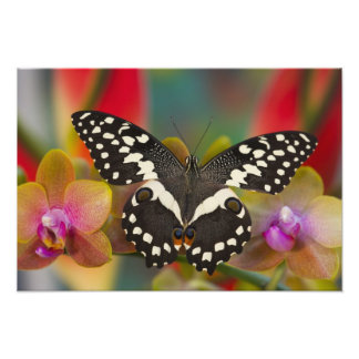 Sammamish, Washington Tropical Butterfly 15 Photo Print