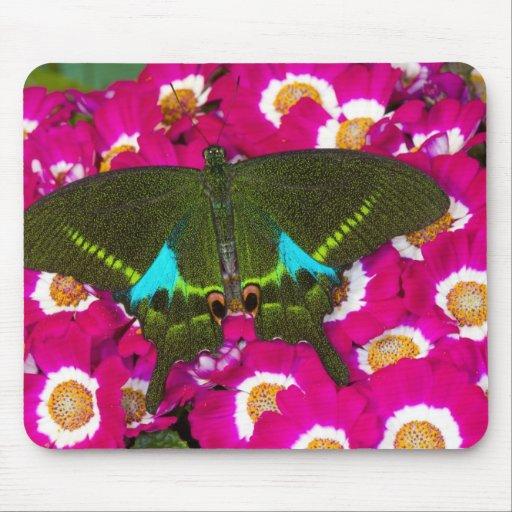 Sammamish, Washington Tropical Butterfly 16 Mousepad