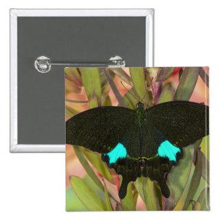 Sammamish, Washington Tropical Butterfly 18 15 Cm Square Badge