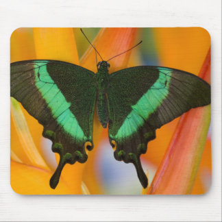 Sammamish, Washington Tropical Butterfly 19 Mouse Pad