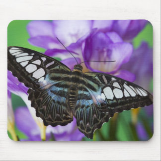 Sammamish, Washington Tropical Butterfly 21 Mouse Pad
