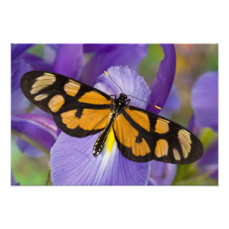 Sammamish, Washington Tropical Butterfly 21 Photo Print