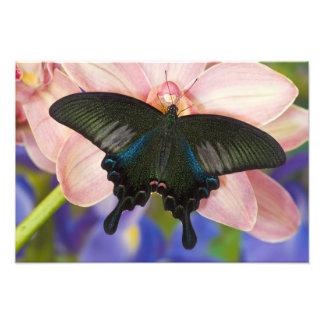 Sammamish, Washington Tropical Butterfly 23 Photo