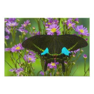 Sammamish, Washington Tropical Butterfly 23 Photographic Print