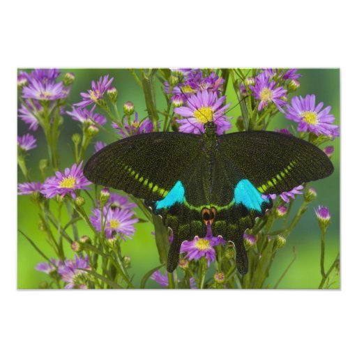Sammamish, Washington Tropical Butterfly 23 Photographic Print