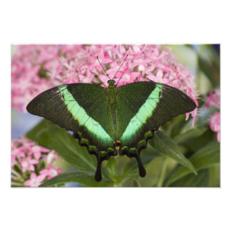 Sammamish, Washington Tropical Butterfly 24 Photo Print