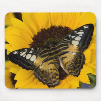 Sammamish, Washington Tropical Butterfly 27 Mouse Pad