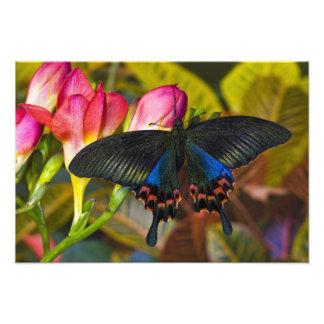 Sammamish, Washington Tropical Butterfly 2 Art Photo