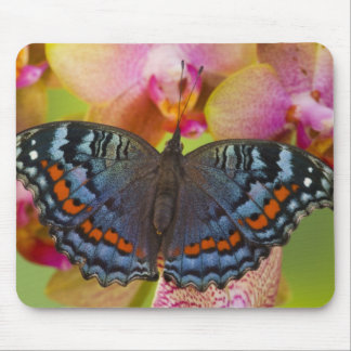 Sammamish Washington Tropical Butterfly 2 Mouse Pad