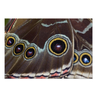 Sammamish Washington Tropical Butterfly 2 Photo Print