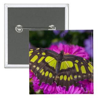 Sammamish, Washington Tropical Butterfly 30 15 Cm Square Badge