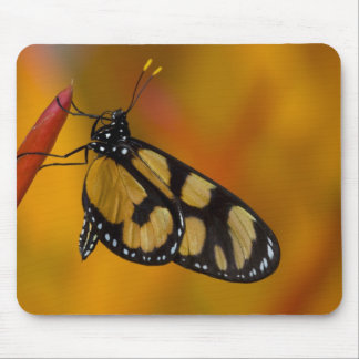 Sammamish, Washington Tropical Butterfly 33 Mouse Pad