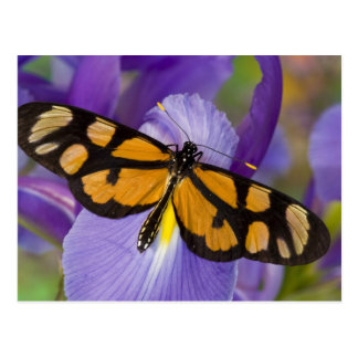 Sammamish, Washington Tropical Butterfly 34 Postcard