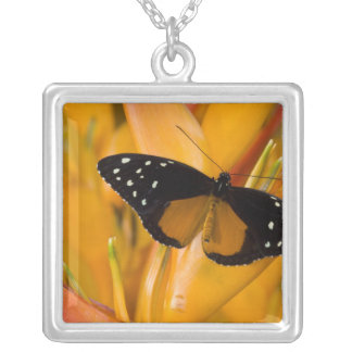 Sammamish, Washington Tropical Butterfly 35 Square Pendant Necklace