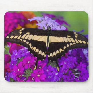 Sammamish, Washington Tropical Butterfly 36 Mouse Pad