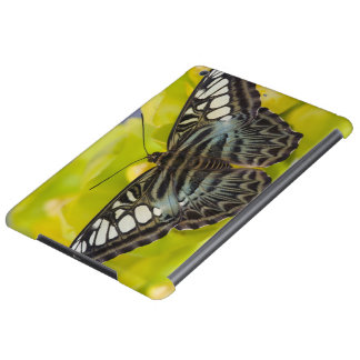 Sammamish, Washington Tropical Butterfly 38