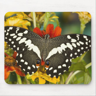 Sammamish, Washington Tropical Butterfly 39 Mousepad