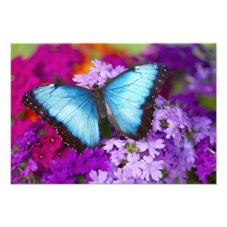 Sammamish Washington Tropical Butterfly 3 Photograph