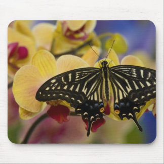 Sammamish, Washington Tropical Butterfly 44 Mouse Pad