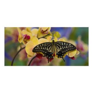 Sammamish, Washington Tropical Butterfly 44 Photograph