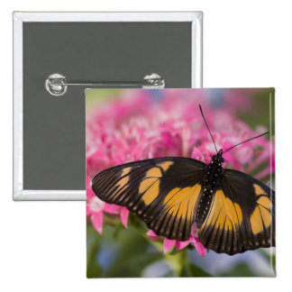 Sammamish, Washington Tropical Butterfly 4 15 Cm Square Badge