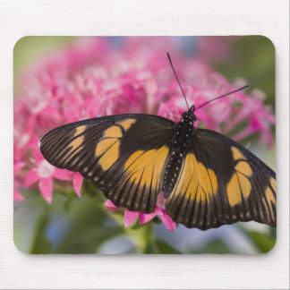 Sammamish Washington Tropical Butterfly 4 Mouse Pads