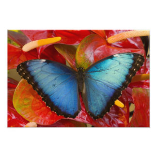Sammamish Washington Tropical Butterfly 4 Photographic Print
