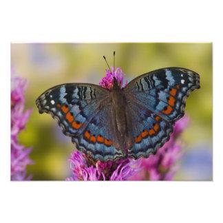 Sammamish Washington Tropical Butterfly 5 Photo