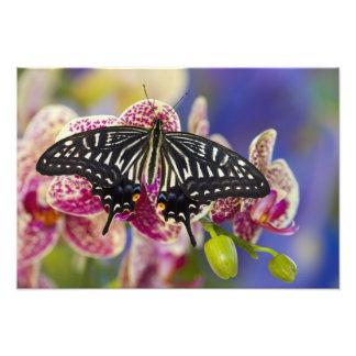 Sammamish, Washington Tropical Butterfly 5 Photo Art