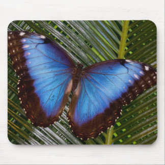 Sammamish Washington Tropical Butterfly 6 Mouse Pad
