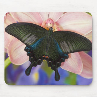 Sammamish, Washington Tropical Butterfly 6 Mouse Pad
