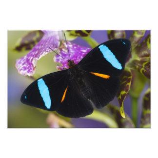 Sammamish, Washington Tropical Butterfly 6 Photographic Print