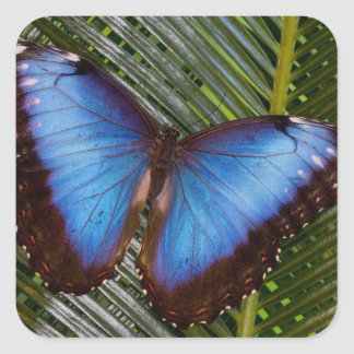Sammamish Washington Tropical Butterfly 6 Square Sticker
