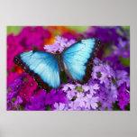 Sammamish Washington Tropical Butterfly 7