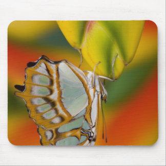 Sammamish, Washington Tropical Butterfly 7 Mousepads