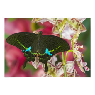 Sammamish, Washington Tropical Butterfly 7 Photograph