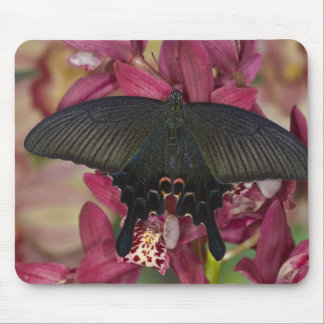 Sammamish Washington Tropical Butterfly 8 Mouse Pad