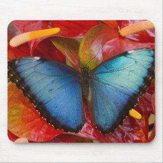 Sammamish Washington Tropical Butterfly 8 Mousepad