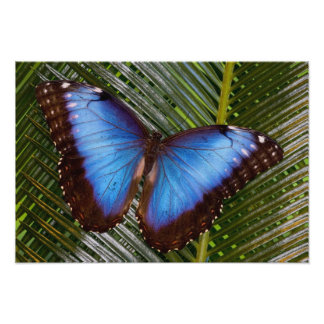 Sammamish Washington Tropical Butterfly 8 Photo