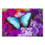 Sammamish Washington Tropical Butterfly 9 Photograph