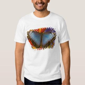 Sammamish Washington Tropical Butterfly 9 Shirt