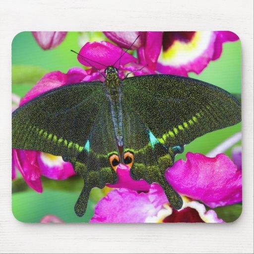 Sammamish, Washington Tropical Butterfly Mousepads