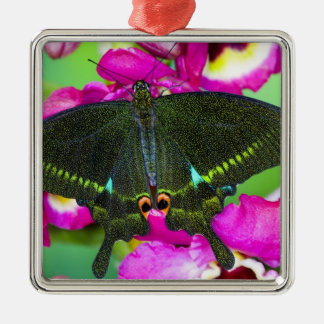 Sammamish, Washington Tropical Butterfly Silver-Colored Square Decoration