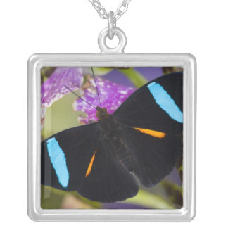 Sammamish, Washington Tropical Butterfly Square Pendant Necklace