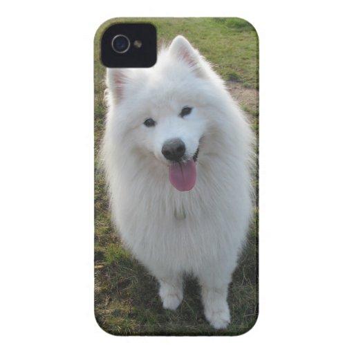 Samoyed dog beautiful photo blackberry bold case