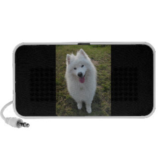 Samoyed dog beautiful photo doodle speakers
