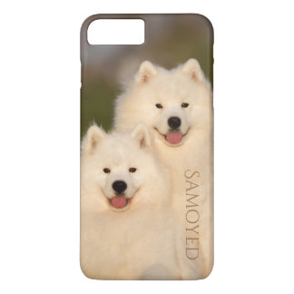 Samoyed Dogs Phone Cover
