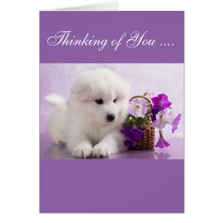 Samoyed Greeting Card; Thinking of You Card
